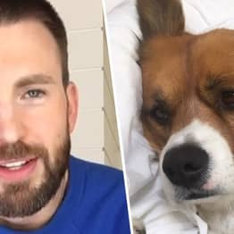 Chris Evans 'Caved' And Joined Instagram So He Could Share Pictures Of His Dog