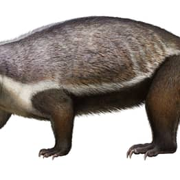 Massive 'Crazy Beast' That Lived Among Last Of The Dinosaurs Discovered
