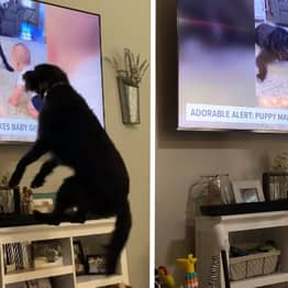 Dog Completely Flips Out When He Sees Himself On The News In Louisiana