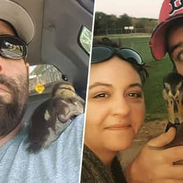 Duck Rescued As A Baby Always Comes Back To Massachusetts Man Who Saved His Life