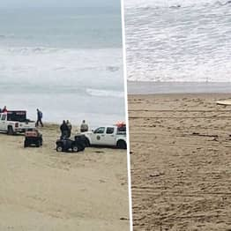 Surfer, 26, Killed By 'Unknown Shark Species' In Attack At California Beach
