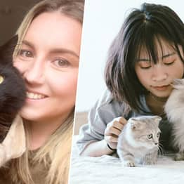 Lonely Brits Should Be Prescribed A Cat To Keep Them Company, MPs Say