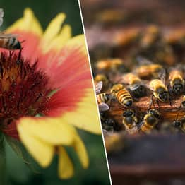 Honeybee Population Is Doing Much Better After Bad Year