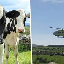 Lancashire Man Killed By Herd Of Cows That Attacked Him During Walk With Wife