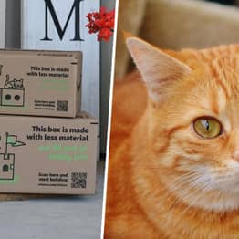New Eco-Friendly Amazon Boxes Can Be Turned Into Pet Houses And Robot Costumes