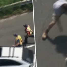 Runaway Dog Avoids Capture On Busy Highway For Seven Minutes