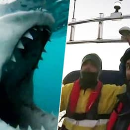 Australian Guy Has Hilariously Calm Reaction To Great White Shark Trying To Take A Bite Out Of His Boat