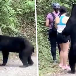 Hikers Stay Calm And Take Selfie With Black Bear In Close Encounter