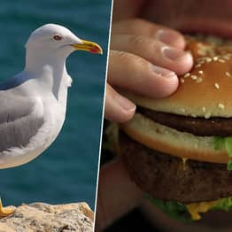 Man Detained In Plymouth After Biting Seagull 'Who Tried Stealing His McDonald's'