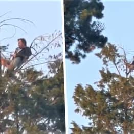 Man Spotted Having Picnic In Bath's Royal Victoria Park At Top Of Giant 60ft Tree