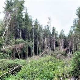 Dog Walker Discovers Eerie 'UFO Crash Site' In The Middle Of Woods