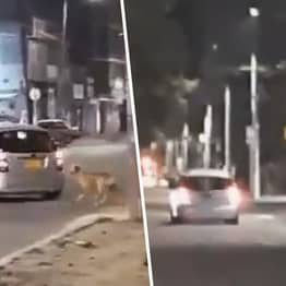 Heartbreaking Video Shows Dog Chasing After Owner Who Just Abandoned Him