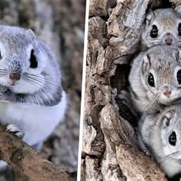 Tiny Squirrels That Look Like Pokémon Can Only Be Found On Remote Japanese Islands