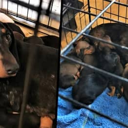 Police Seize More Than 30 Stolen Dogs Worth Over $140,000