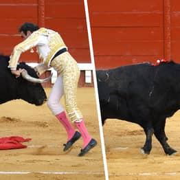 Bull Stabs Matador In The Butt With Its Horns In Post-Lockdown Fight