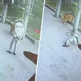 Cat Falls Out Of Sky And Onto Pensioner's Head Knocking Him Out