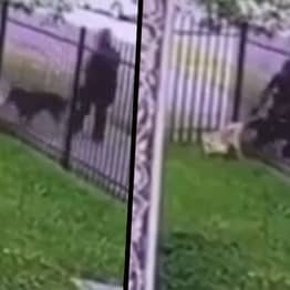 Detroit Police Force Defends Cop Who Shot And Killed Dog In Its Own Garden