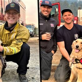 Golden Retriever Therapy Dog Offers Hugs To Firefighters Tackling California Wildfires