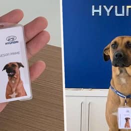 Brazilian Hyundai Dealership Adopts Stray Dog After He Showed Up Every Day