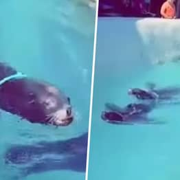 Sea Lion Forced To Tow Children In Boat With Rope Tied Around Its Neck