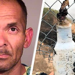 Police Arrest Man Who Started Wildfire With Molotov Cocktail Again