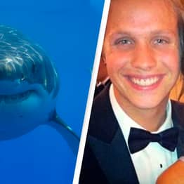 Pregnant Woman Dives Into Ocean To Save Husband From Shark Attack
