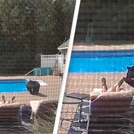 Bear Caught On Video Nudging Oblivious Man Awake As He Naps By Pool