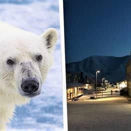 Bar In Norway Where Polar Bears Look Through The Window Goes On Sale