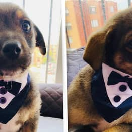 Heartbreaking Photos Show Puppy In Tuxedo Waiting For Owners Who Never Turn Up