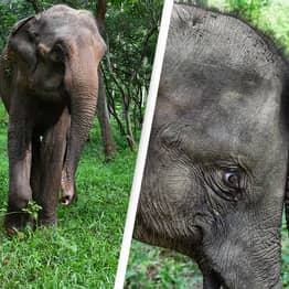 Retired Circus Elephants To Move To State Of The Art Conservation Centre In Florida