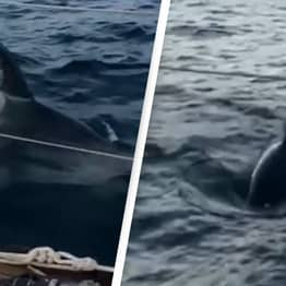 Pod Of Killer Whales Attack Couple's Yacht For 45 Minutes Off Coast Of Spain