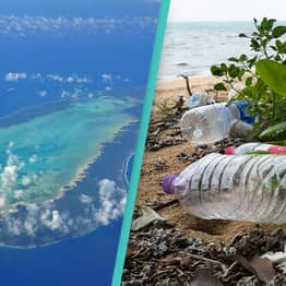 One Of The World's 'Greatest Surviving Natural Treasures' Is Being Destroyed By Plastic Pollution