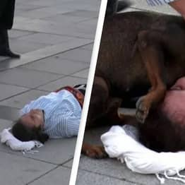 Stray Dog Interrupts Performance To Help Actor Pretending To Be Injured