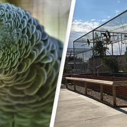 Wildlife Park Removes Parrots From Display For Swearing At Customers