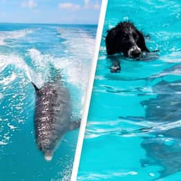 Dog Makes Best Friends With Dolphin As They Play Together In Ocean