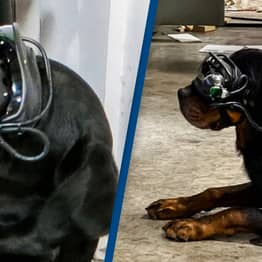 Augmented Reality To Be Used By Dogs in the United States Military