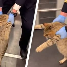 Cat Escorted Off Train After Being Caught Without A Ticket