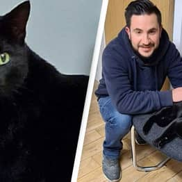 Cat Missing For More Than 2 Years Found 60 Miles Away