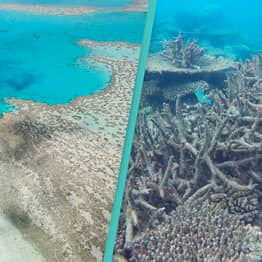 The Great Barrier Reef Has Lost Half Its Corals In 25 Years