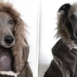 You Can Now Get A Hooded Parka For Your Dog