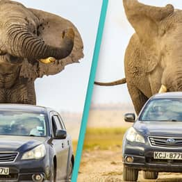 Massive Elephant Called Jumbo Chases Car After Being Spooked By Speeding Driver