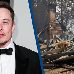 Elon Musk Is Providing Internet To Wildfire Towns To Help Firefighters