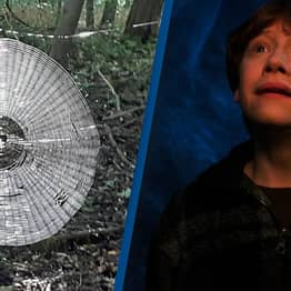 Human-Sized Spider Web Found In Forest