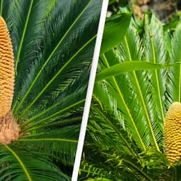 Climate Change Has Revived A Plant In The UK That Hasn't Been Seen In 60 Million Years