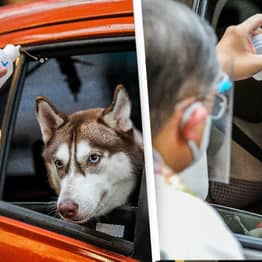 Priests Bless Pets With Holy Water In Socially Distant Drive-Thru Ceremony