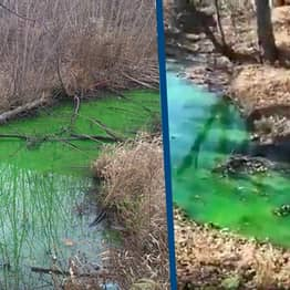River Turns Bright Green As Environmental Protection Officers Check For Chemical Poisoning