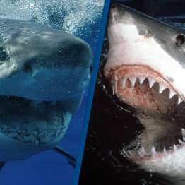 Sharks Have Killed The Most People In Australia This Year Since 1934