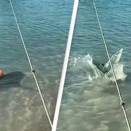 Heroic Dog Jumps Into Sea To Fend Off Shark Stalking Her Owner