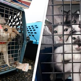 Pet Stores In San Antonio Will Only Sell Rescue Dogs And Cats From Next Year