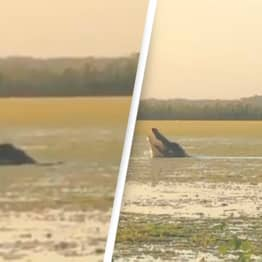 Huge 13ft Alligator Rises Out Of Water To Snatch Duck In Front Of Hunters